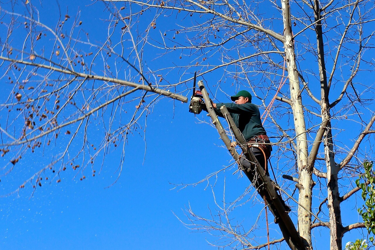 Contact Us-Fort Lauderdale FL Tree Trimming and Stump Grinding Services-We Offer Tree Trimming Services, Tree Removal, Tree Pruning, Tree Cutting, Residential and Commercial Tree Trimming Services, Storm Damage, Emergency Tree Removal, Land Clearing, Tree Companies, Tree Care Service, Stump Grinding, and we're the Best Tree Trimming Company Near You Guaranteed!