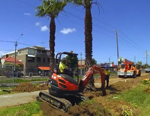 Palm Tree Removal-Fort Lauderdale FL Tree Trimming and Stump Grinding Services-We Offer Tree Trimming Services, Tree Removal, Tree Pruning, Tree Cutting, Residential and Commercial Tree Trimming Services, Storm Damage, Emergency Tree Removal, Land Clearing, Tree Companies, Tree Care Service, Stump Grinding, and we're the Best Tree Trimming Company Near You Guaranteed!