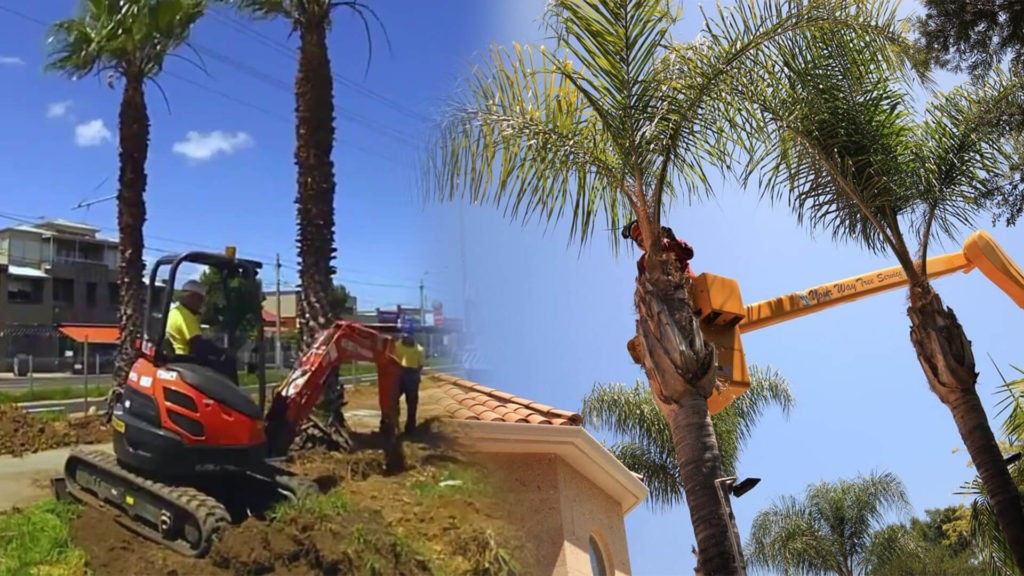 Palm tree trimming & palm tree removal-Fort Lauderdale FL Tree Trimming and Stump Grinding Services-We Offer Tree Trimming Services, Tree Removal, Tree Pruning, Tree Cutting, Residential and Commercial Tree Trimming Services, Storm Damage, Emergency Tree Removal, Land Clearing, Tree Companies, Tree Care Service, Stump Grinding, and we're the Best Tree Trimming Company Near You Guaranteed!