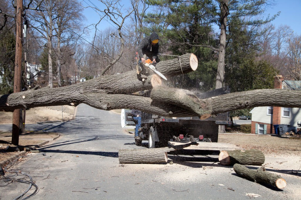 Residential Tree Services-Fort Lauderdale FL Tree Trimming and Stump Grinding Services-We Offer Tree Trimming Services, Tree Removal, Tree Pruning, Tree Cutting, Residential and Commercial Tree Trimming Services, Storm Damage, Emergency Tree Removal, Land Clearing, Tree Companies, Tree Care Service, Stump Grinding, and we're the Best Tree Trimming Company Near You Guaranteed!
