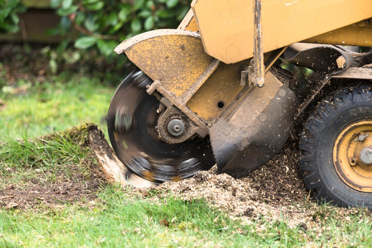 Stump Grinding-Fort Lauderdale FL Tree Trimming and Stump Grinding Services-We Offer Tree Trimming Services, Tree Removal, Tree Pruning, Tree Cutting, Residential and Commercial Tree Trimming Services, Storm Damage, Emergency Tree Removal, Land Clearing, Tree Companies, Tree Care Service, Stump Grinding, and we're the Best Tree Trimming Company Near You Guaranteed!