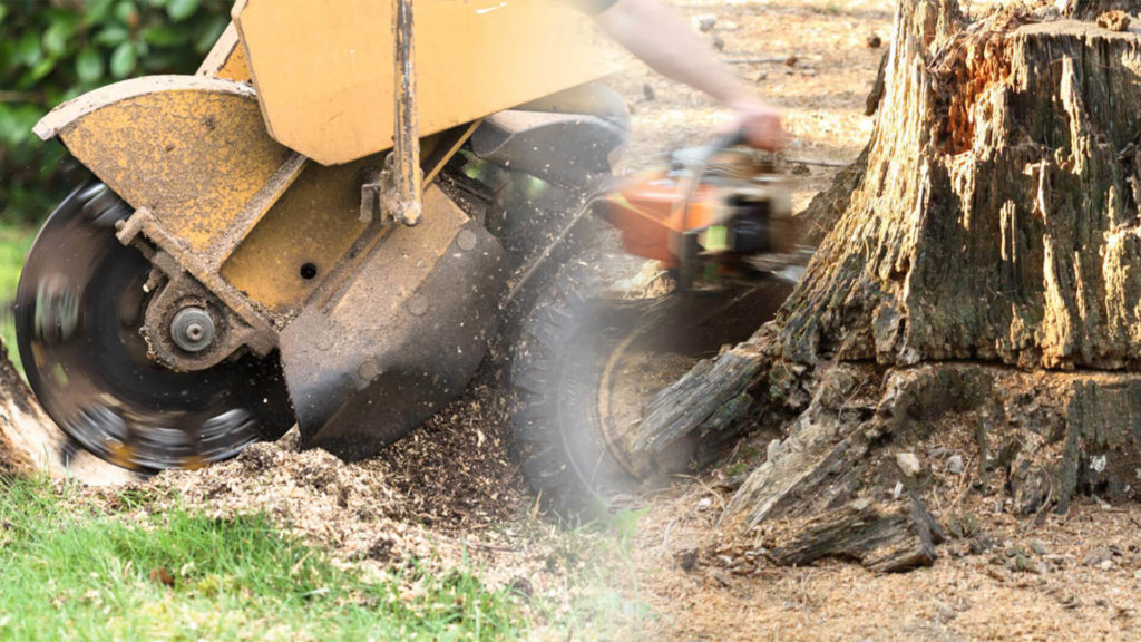 Stump grinding & removal-Fort Lauderdale FL Tree Trimming and Stump Grinding Services-We Offer Tree Trimming Services, Tree Removal, Tree Pruning, Tree Cutting, Residential and Commercial Tree Trimming Services, Storm Damage, Emergency Tree Removal, Land Clearing, Tree Companies, Tree Care Service, Stump Grinding, and we're the Best Tree Trimming Company Near You Guaranteed!