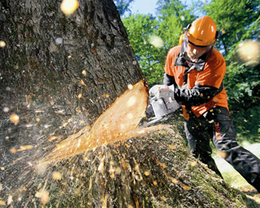Tree Cutting-Fort Lauderdale FL Tree Trimming and Stump Grinding Services-We Offer Tree Trimming Services, Tree Removal, Tree Pruning, Tree Cutting, Residential and Commercial Tree Trimming Services, Storm Damage, Emergency Tree Removal, Land Clearing, Tree Companies, Tree Care Service, Stump Grinding, and we're the Best Tree Trimming Company Near You Guaranteed!