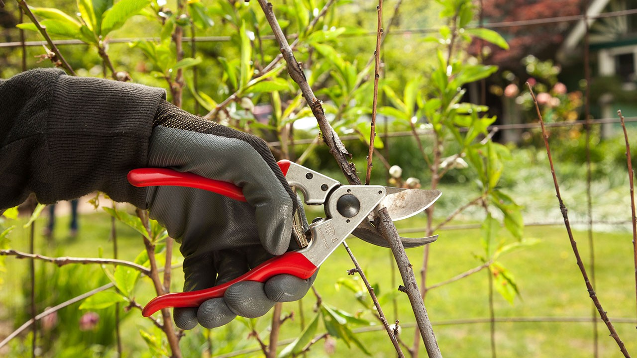 Tree Pruning-Fort Lauderdale FL Tree Trimming and Stump Grinding Services-We Offer Tree Trimming Services, Tree Removal, Tree Pruning, Tree Cutting, Residential and Commercial Tree Trimming Services, Storm Damage, Emergency Tree Removal, Land Clearing, Tree Companies, Tree Care Service, Stump Grinding, and we're the Best Tree Trimming Company Near You Guaranteed!