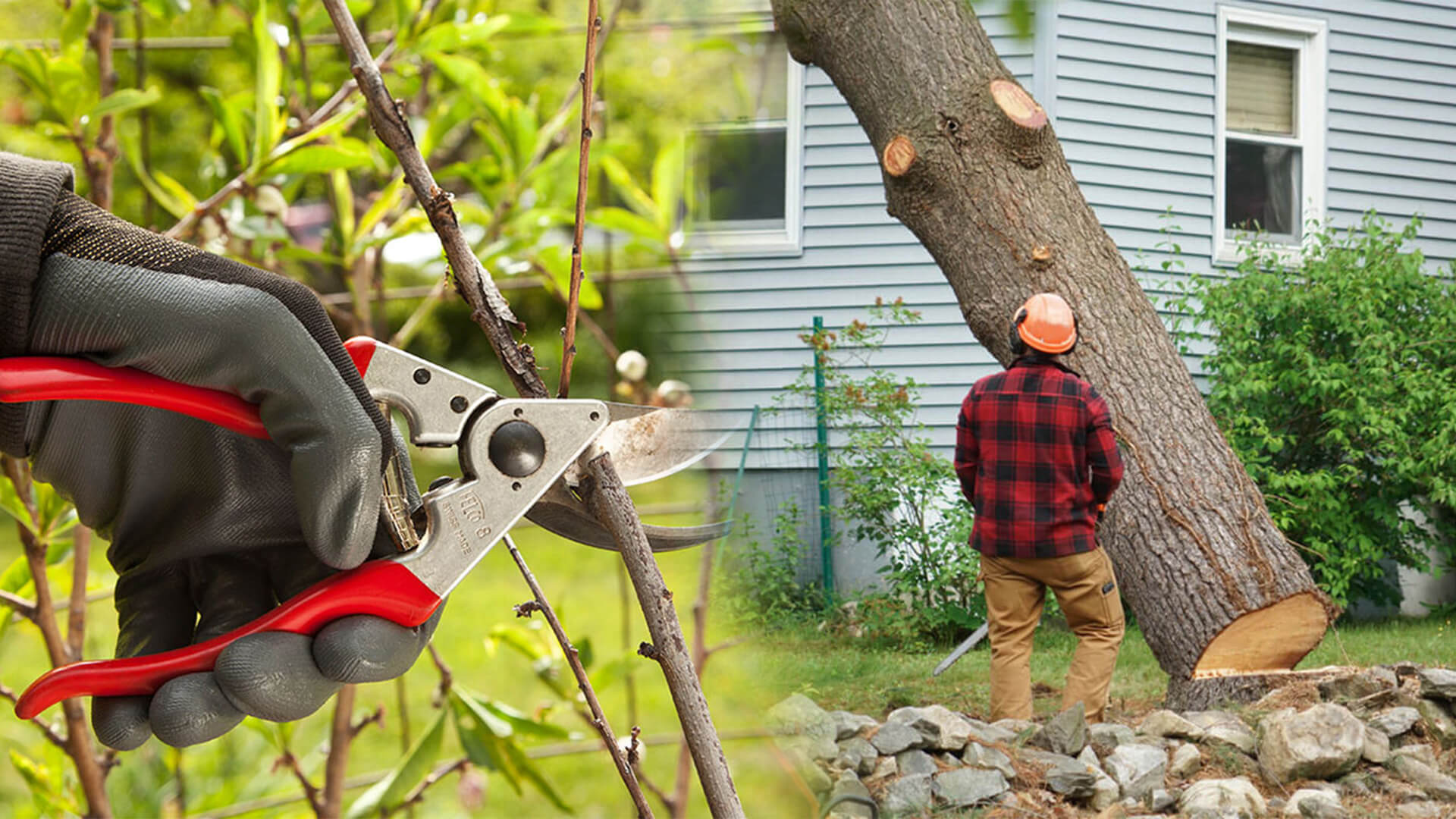Tree pruning & tree removal-Fort Lauderdale FL Tree Trimming and Stump Grinding Services-We Offer Tree Trimming Services, Tree Removal, Tree Pruning, Tree Cutting, Residential and Commercial Tree Trimming Services, Storm Damage, Emergency Tree Removal, Land Clearing, Tree Companies, Tree Care Service, Stump Grinding, and we're the Best Tree Trimming Company Near You Guaranteed!